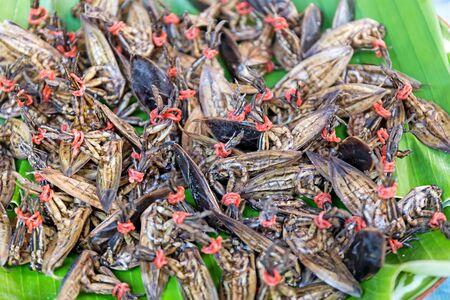 Fresh bug have pungent smell for food ingredients