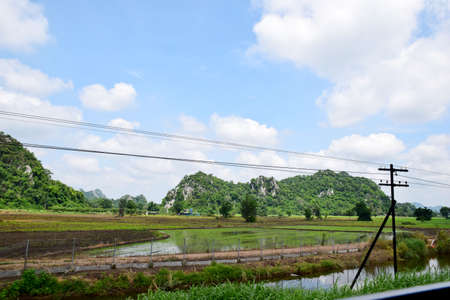 champ de mais: Le beau champ de maïs