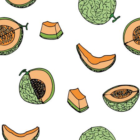 autumn colouring: Melon, Cantalop seamless pattern by hand drawing on white backgrounds.