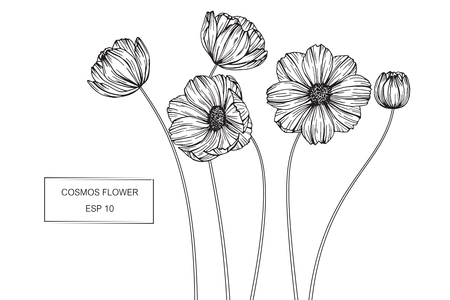 Black Line Flower Drawing : Beautiful monochrome black and white seamless background with