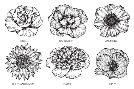 Collection of flowers drawing and sketch with line-art on white backgrounds. Stock Photo