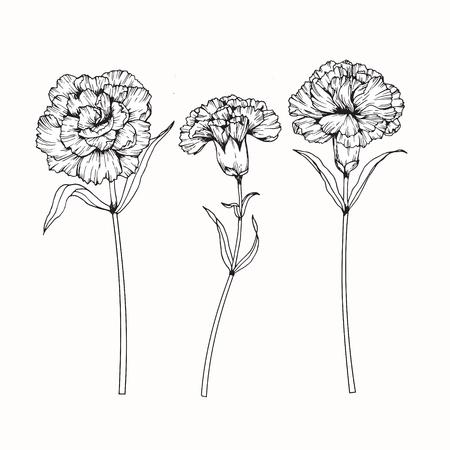 Anjerbloemen tekenen en schetsen met line-art op witte achtergronden.