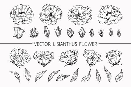 図面トルコギキョウの花は、白い背景の線画でスケッチ。