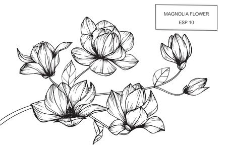 図面マグノリアの花は、白い背景の線画でスケッチ。