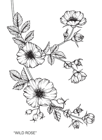 Wild rose flower drawing and sketch with black and white line art wild rose flower drawing and sketch with black and white line art royalty free cliparts vectors and stock illustration image 89406276 mightylinksfo