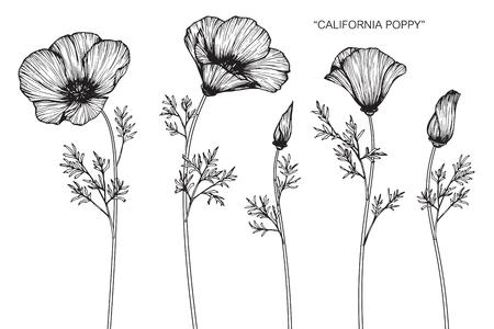 カリフォルニアポピー花白い背景のラインアートと図面とスケッチ。  イラスト・ベクター素材