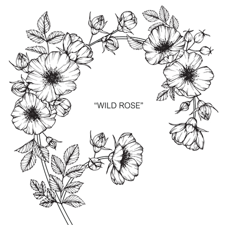 Wild rose flower. Drawing and sketch with black and white line-art. Ilustração