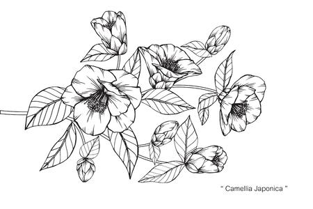Flor de Camellia Japonica. Dibujar y esbozar con line-art en blanco y negro. Foto de archivo - 89404928