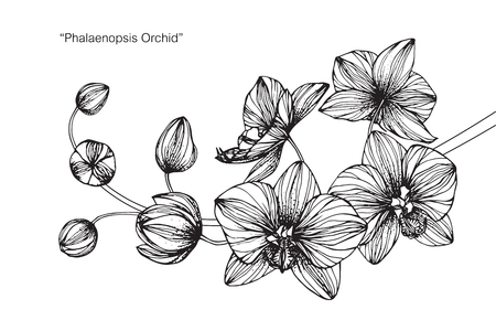 Orchid flower. Drawing and sketch with black and white line-art.