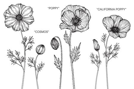 コスモス、ポピー、カリフォルニアポピーの花。黒と白のラインアートで描画とスケッチ。
