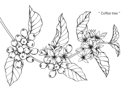 Coffee tree. Drawing and sketch with black and white line-art. Zdjęcie Seryjne - 89404940