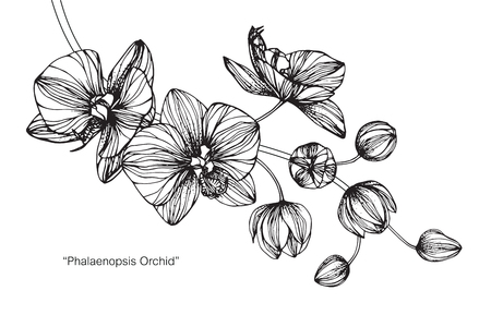 Orchid flower. Drawing and sketch with black and white line-art. Stock Illustratie