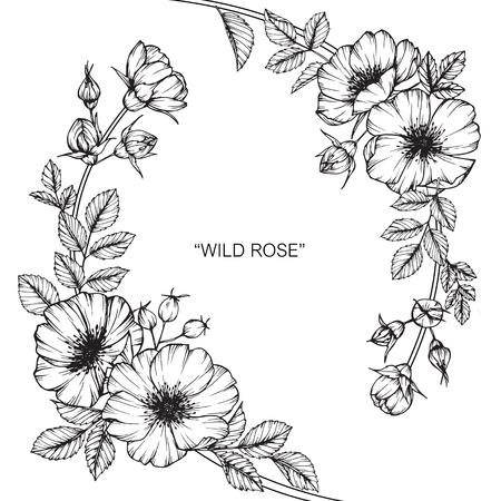 Flor color de rosa salvaje Dibujar y esbozar con line-art en blanco y negro. Foto de archivo - 88939740