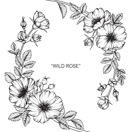 Wild rose flower drawing and sketch with black and white line art wild rose flower drawing and sketch with black and white line art royalty free cliparts vectors and stock illustration image 88939740 mightylinksfo