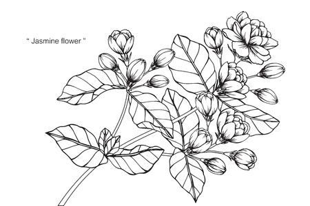 Flor de jasmim. Desenho e esboço com linha-arte em preto e branco. Ilustración de vector