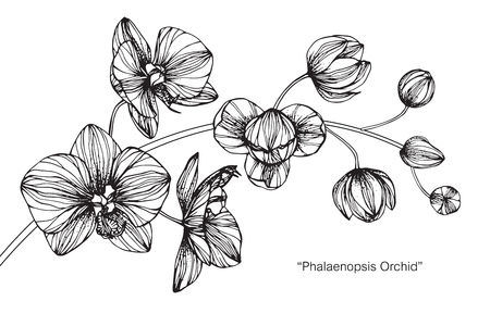 Orchid flower. Drawing and sketch with black and white line-art. Vettoriali