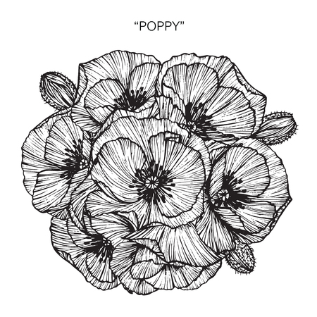 California Poppy Flowers Drawing And Sketch With Line Art On