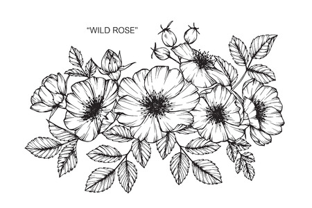 Wild rose flower drawing and sketch with black and white line art wild rose flower drawing and sketch with black and white line art royalty free cliparts vectors and stock illustration image 88939667 mightylinksfo