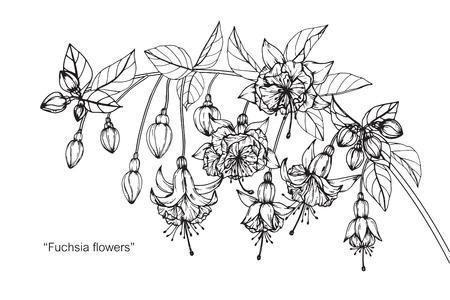 Fuchsia flower drawing. Reklamní fotografie - 88414896