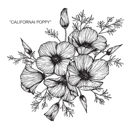Californie poppy flower drawing Banque d'images - 88417575