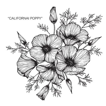 California poppy flower drawing.