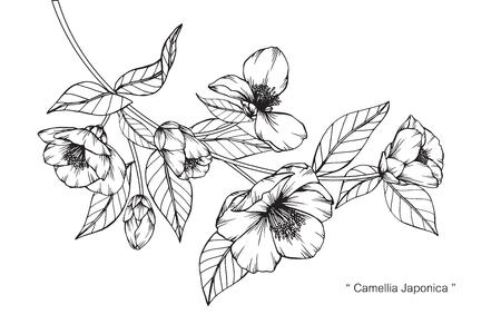 Camellia Japonica bloementekening.