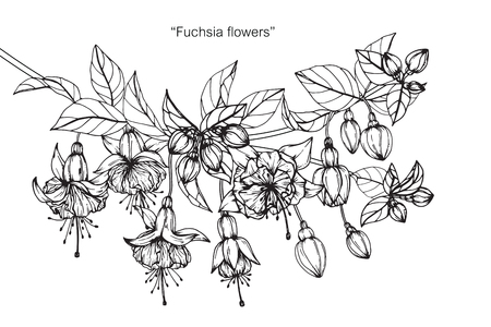 Fuchsia flower drawing. Reklamní fotografie - 88417580