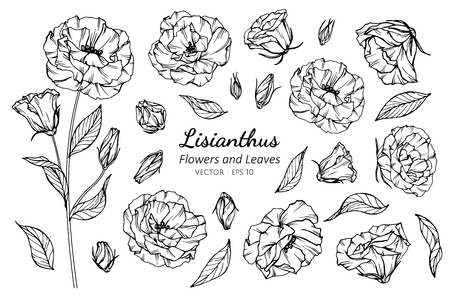 Collection set of lisianthus flower and leaves drawing illustration. for pattern, logo, template, banner, posters, invitation and greeting card design.  イラスト・ベクター素材