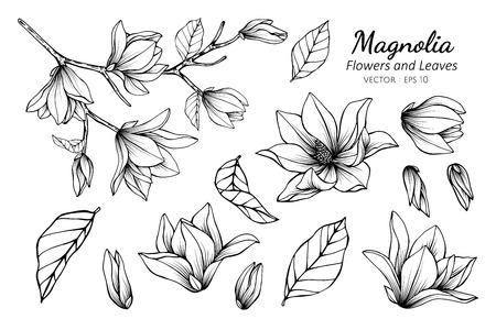Collectie set magnolia bloem en bladeren tekening illustratie. voor patroon, logo, sjabloon, banner, posters, uitnodiging en wenskaart ontwerp. Logo