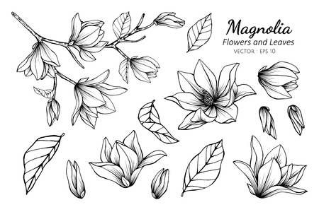 Conjunto de colección de flor de magnolia y hojas de dibujo ilustración. para el diseño de patrones, logotipos, plantillas, pancartas, carteles, invitaciones y tarjetas de felicitación. Logos