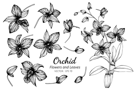 Collection set of orchid flower and leaves drawing illustration. for pattern, template, banner, posters, invitation and greeting card design.