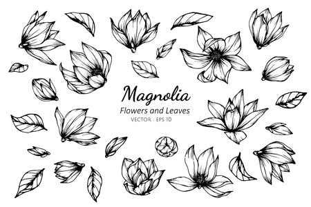 Collection set of magnolia flower and leaves drawing illustration. for pattern, logo, template, banner, posters, invitation and greeting card design. Illustration