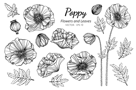 Collection set of poppy flower and leaves drawing illustration. for pattern, logo, template, banner, posters, invitation and greeting card design.
