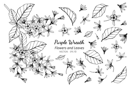 Collection set of purple wreath flower and leaves drawing illustration. for pattern, logo, template, banner, posters, invitation and greeting card design.