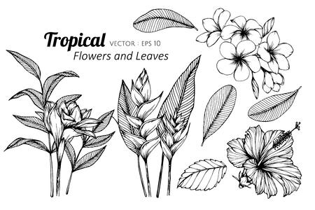 Ensemble de collection de fleurs tropicales et de feuilles dessin illustration. pour la conception de motifs, de logos, de modèles, de bannières, d'affiches, d'invitations et de cartes de voeux.