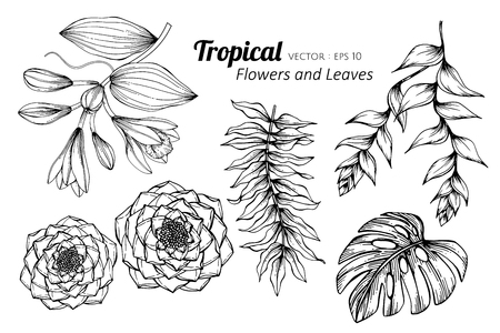 Collection set of Tropical flower and leaves drawing illustration. for pattern, logo, template, banner, posters, invitation and greeting card design.