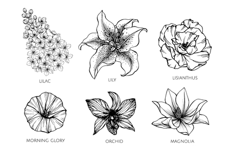 Collection set of flower drawing illustration. for pattern, logo, template, banner, posters, invitation and greeting card design.  イラスト・ベクター素材