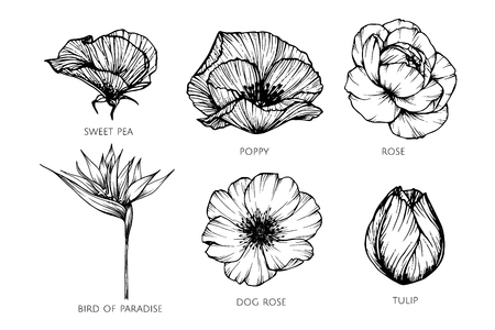 Collection set of flower drawing illustration. for pattern, logo, template, banner, posters, invitation and greeting card design. Stock Illustratie