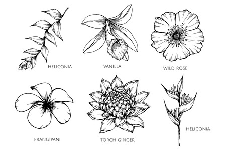 Collection set of flower drawing illustration. for pattern, template, banner, posters, invitation and greeting card design. Stock Illustratie