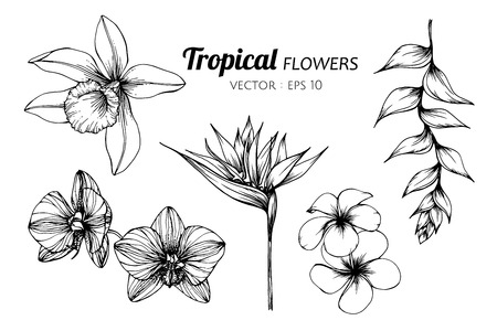Collection set of Tropical flower drawing illustration. for pattern, logo, template, banner, posters, invitation and greeting card design.