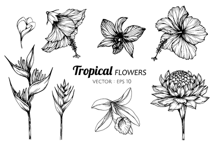 Collection set of Tropical flower drawing illustration. for pattern, template, banner, posters, invitation and greeting card design.