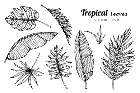 Collection set of Tropical leaves drawing illustration. for pattern, template, banner, posters, invitation and greeting card design.