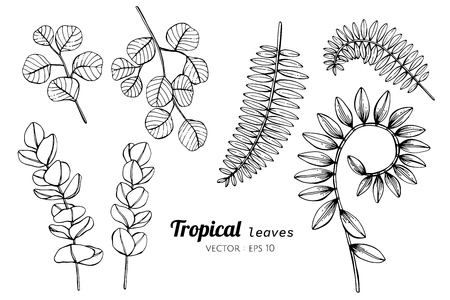 Collection set of Tropical leaves drawing illustration. for pattern, logo, template, banner, posters, invitation and greeting card design.  イラスト・ベクター素材