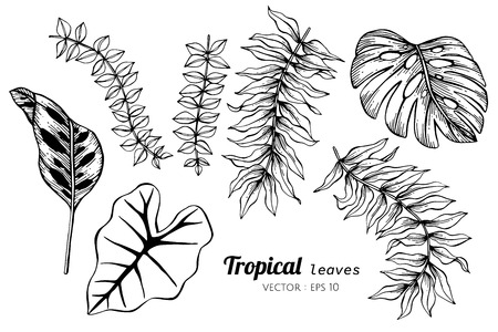 Collection set of Tropical leaves drawing illustration. for pattern, logo, template, banner, posters, invitation and greeting card design. Ilustração