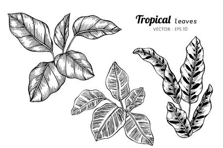 Sammlungssatz tropische Blätter, die Illustration zeichnen. für Muster, Logo, Vorlage, Banner, Poster, Einladungs- und Grußkartendesign.