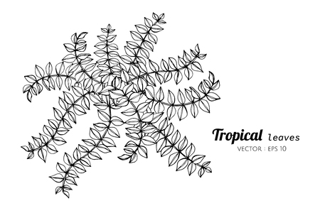 Tropical leaves drawing illustration. for pattern, template, banner, posters, invitation and greeting card design.