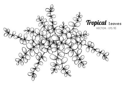 Tropical leaves drawing illustration. for pattern, logo, template, banner, posters, invitation and greeting card design.