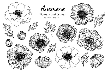 Collection set of anemone flower and leaves drawing illustration. for pattern, logo, template, banner, posters, invitation and greeting card design.