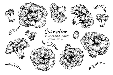 Collection set of carnation flower and leaves drawing illustration. for pattern, logo, template, banner, posters, invitation and greeting card design. Illustration