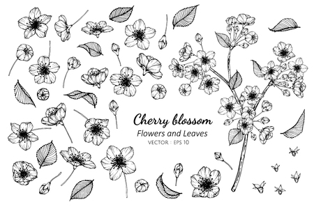 Collection set of cherry blossom flower and leaves drawing illustration. for pattern, logo, template, banner, posters, invitation and greeting card design.